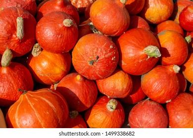 Hokkaido bright orange pumpkins pile
