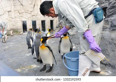 Hokkaido, Japan - July 18, 2018; Worker is feeding penguins in summer at Asahiyama zoo, Asahikawa, Hokkaido, Japan.