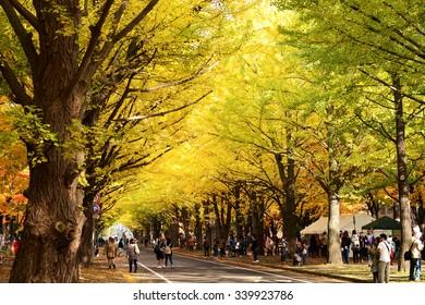 HOKKAIDO, JAPAN - Oct 24, 2015: The Golden leaves festival of Hokkaido University in Sapporo, Japan.