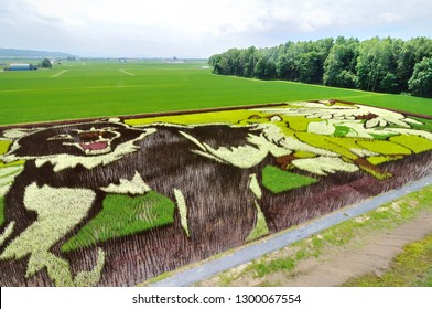 Hokkaido,Japan-July 19,2018: Tanbo Art, various types and colors plant rice to create images in a paddy field in Asahikawa, Japan.