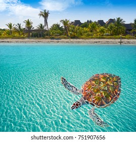 Holbox Island beach in Quintana Roo of Mexico