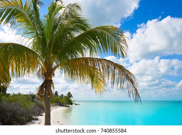 Holbox Island paradise beach palm trees in Quintana Roo of Mexico