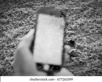 Holders of a Smartphone. Blur. With black and white. The background is lawn. Smart phone. Communication tools that are needed in everyday life.