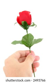 holding a artificial red rose with white background