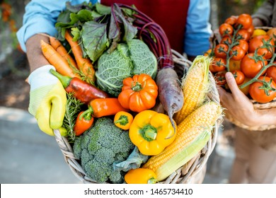 Holding baskets full of freshly plucked various vegetables in the hothouse of an agricultural farm. Concept of healthy eating and rich harvest
