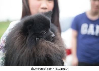 Holding Black dog