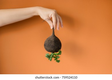holding a black radish on colored background