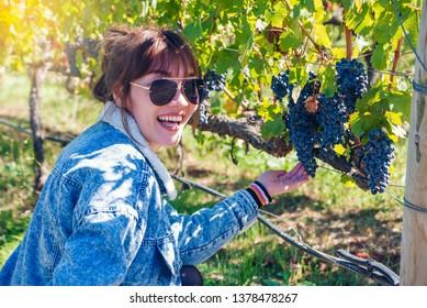 ฺWoman holding Bunch of red grape at vine. ripe purple bunch at Napa Valley San Francisco. outdoor harvesting season concept.