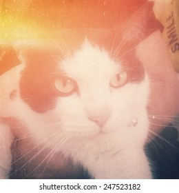 holding cat,instagram filter