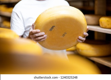 Holding cheese wheel at the cheese storage during the aging process. Close-up view with no face