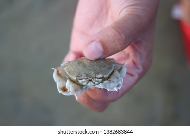 holding crab by human hand