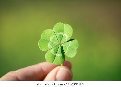Holding a lucky four leaf clover.