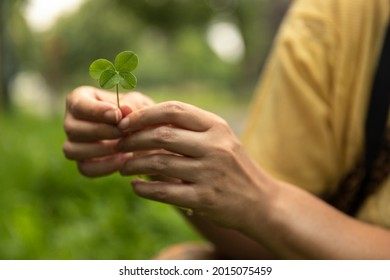 Holding a lucky four leaf clover, good luck shamrock, or lucky charm found in a grass field surrounded by greenery and being picked by a woman showing her rare finding. Blurry background