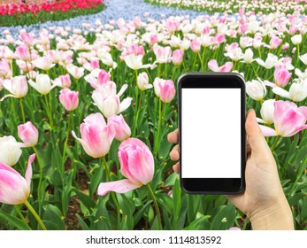 holding mobile with nature background