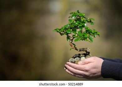 Holding a money tree in the palm of your hand.