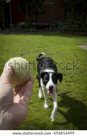 Holding Out Old Tennis Ball Front Stock Photo Edit Now 696816499