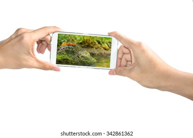 Holding smart phone take a photo of leaf on rock on white background