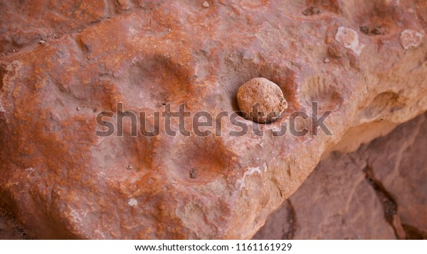 Holes carved into rock used by the Basketmaker culture to mix paint for pictograph rock art, Snake Gulch Canyon, Arizona, USA.