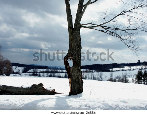 A holey tree taken in January in Central Vermont
