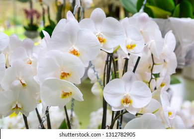 holiday background with beautiful close up white orchid flowers