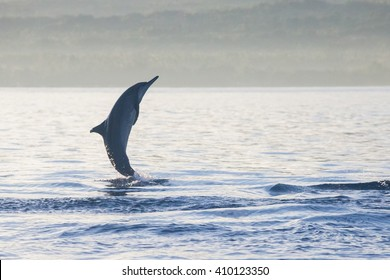 Holiday in Bali - Dolphin Beach Lovina Bali, Dolphin Jumping