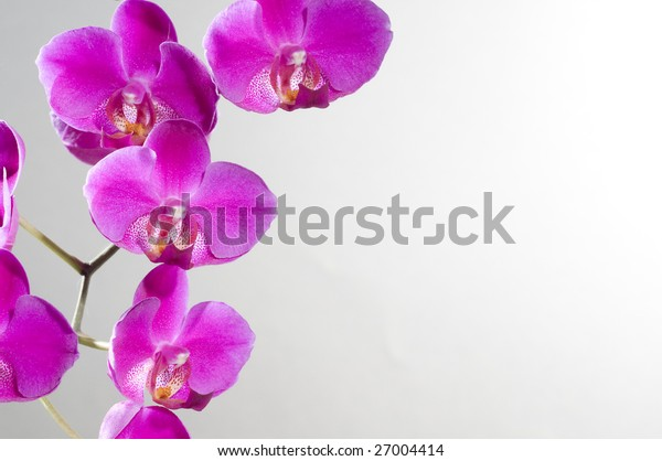 Holiday greeting card with beautiful fresh orchid