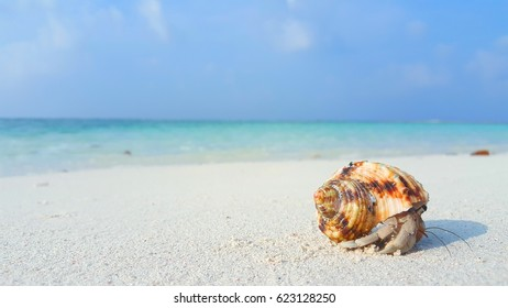 Holiday hermit crab on white sand beach with blue sea sky background