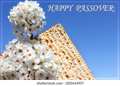 holiday of Passover, branch of a blossoming tree and matzo on the background of bright blue sky with an inscription - Happy Passover