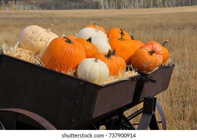 Holiday Pumpkins in Rustic Metal Wagon