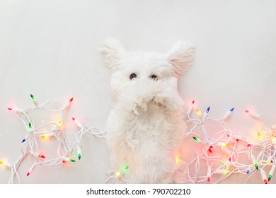Holiday Puppy Wrapped in lights.