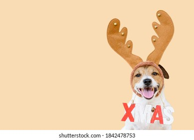 Holiday season greeting card with dog in Christmas costume holding XMAS sign against seamless background