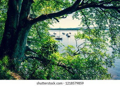 Holiday spots for picnicking, sailing, boat riding, leisure activities and shade. Green trees at lakeside.