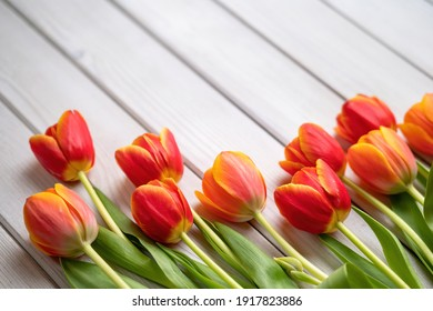 Holiday spring background. Colorful tulip flowers on white wooden backdrop. Greeting card with copy space for Valentine's Day, Woman's Day and Mother's Day.