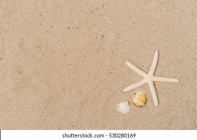 Holiday summer background, sea shells and starfish on sandy beach.