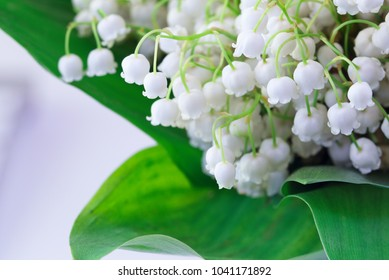 Holidays Concept - Post card with fresh green-muguet bouquet close-up. Background or cover with copy space for Mother's Day, Woman's Day and Valentine's Day or other springtime occasion card template.