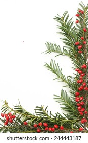 Holidays decoration elements, Frame of christmas tree and red berberis branches - holiday decoration concept - Christmas border