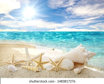 Holidays in the wonderful Caribbean Samana beach, summer vacation, background with starfish,  sea shells, beach and sunny sky,  tropical symbol