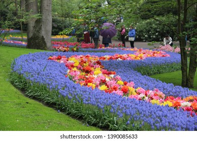 Holland, Amsterdam - May 2019: Keukenhof - National Flower Park. Each year it opens only for a couple of months - for the period of flowering, there are hundreds of varieties of tulips, daffodils, lil