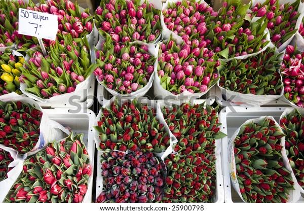 Holland tulips on the market