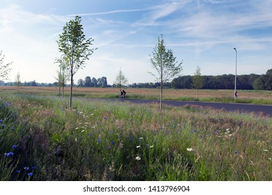 Hollandscheveld, the Netherlands - June 2, 2019: Blooming cornflowers on the roadside at the Hollandscheveld ring road, the Netherlands