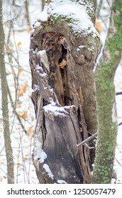the hollow in the tree