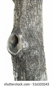 A hollow tree isolated