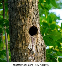 A hollow in the trunk of a tree. A natural nest of birds.