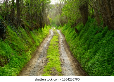 hölzerner Bergweg bei hinten beleuchtet, Frühjahr