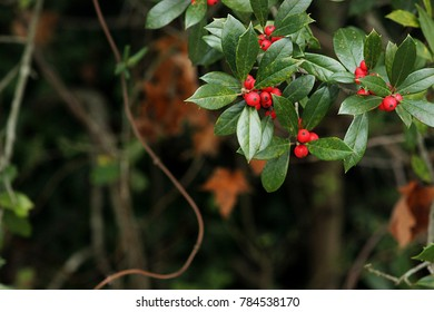 Holly berries top right corner