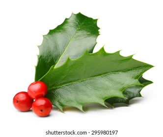 Holly berry leaves Christmas decoration isolated on white background