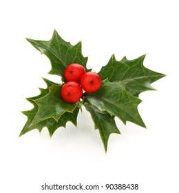 holly berry sprig, christmas symbol