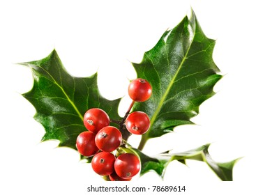 Holly branch with berries, isolated