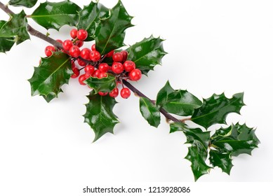 holly branches isolated frame - holly branch background black slate and heart x-mas