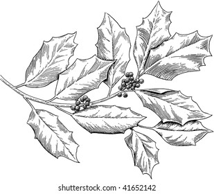 Holly, engraved style, b/w